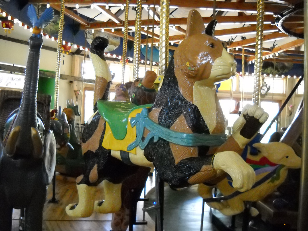 Nederland-CO-Carousel-of-Happiness-cat