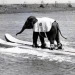 elephant-on-water-skis